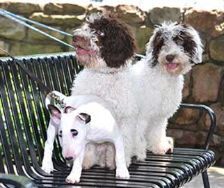 Pups on bench